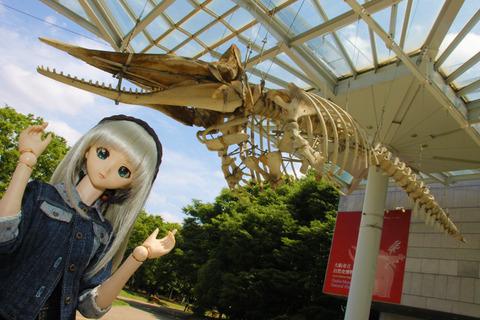 USJ、大阪自然史博物館 253-2