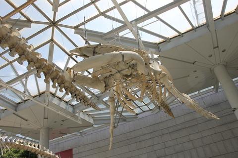USJ、大阪自然史博物館 251