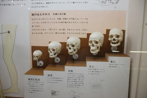 USJ、大阪自然史博物館 412