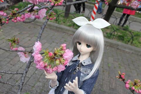 大阪城公園花見 121