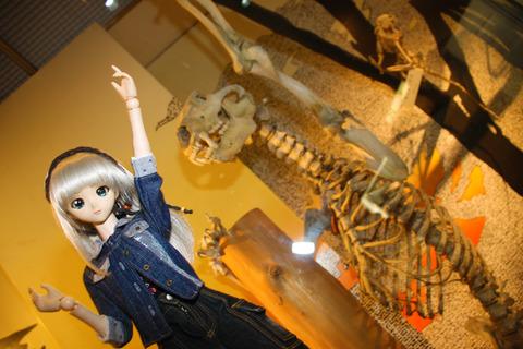 USJ、大阪自然史博物館 408-2