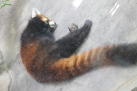 天王寺動物園 153