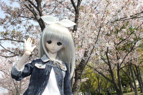 大阪城公園花見 008