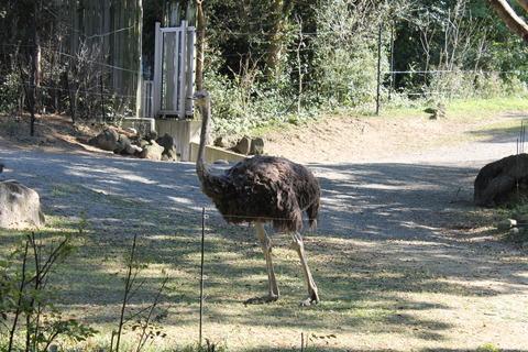 天王寺動物園 165