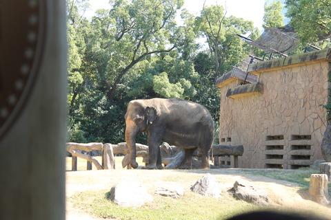 天王寺動物園 126