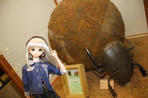 USJ、大阪自然史博物館 414-2