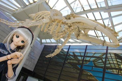 USJ、大阪自然史博物館 254-2