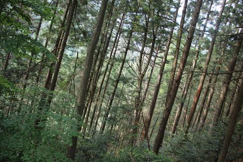 大井川鉄道 242