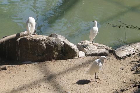 天王寺動物園 090