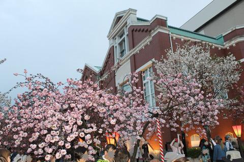 大阪城公園花見 163-2