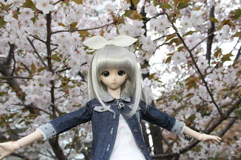 大阪城公園花見 149