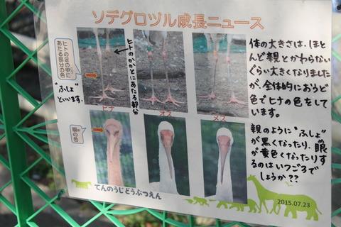 天王寺動物園 152