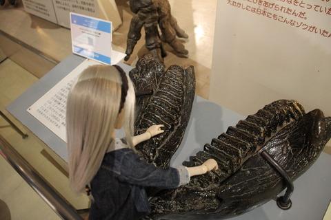 USJ、大阪自然史博物館 315