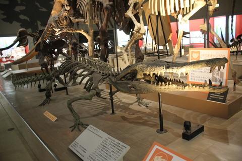 USJ、大阪自然史博物館 319