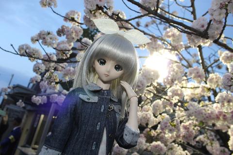 大阪城公園花見 176-2
