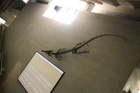 USJ、大阪自然史博物館 390
