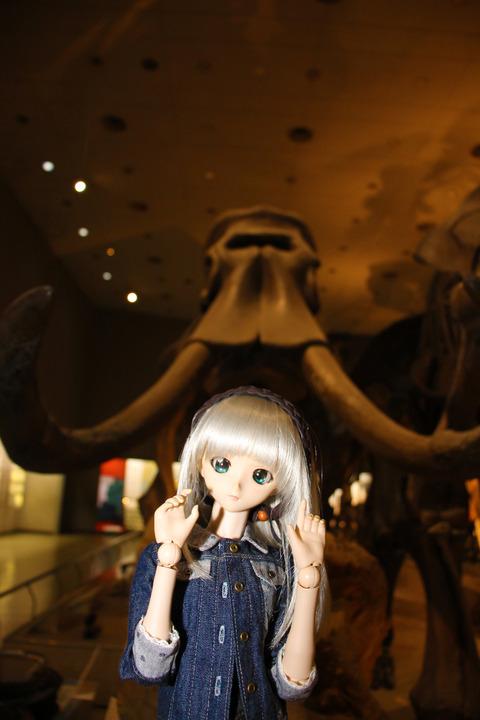 USJ、大阪自然史博物館 314-2
