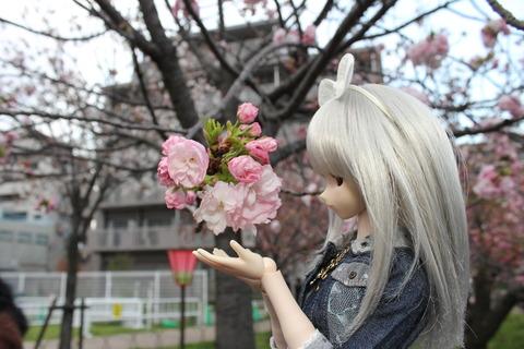 大阪城公園花見 135