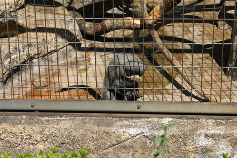 天王寺動物園 108