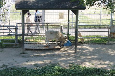 天王寺動物園 130