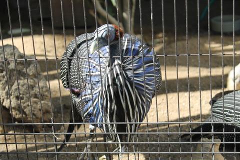 天王寺動物園 057