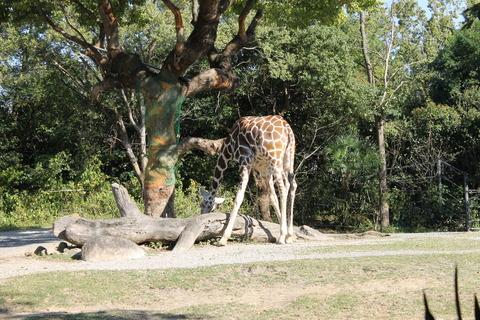 天王寺動物園 177