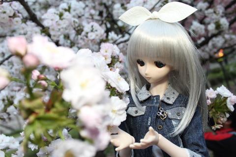 大阪城公園花見 166
