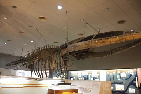 USJ、大阪自然史博物館 407