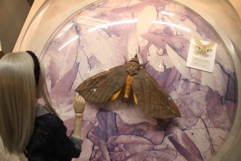USJ、大阪自然史博物館 394