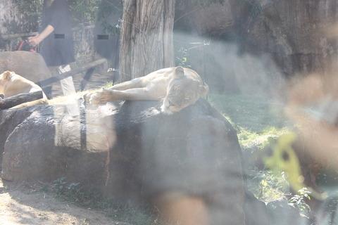 天王寺動物園 170