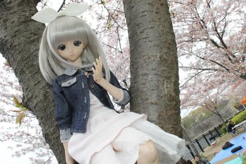 大阪城公園花見 074