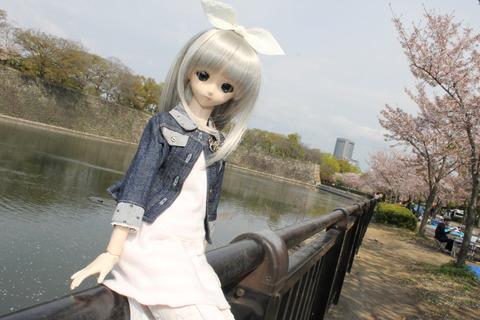 大阪城公園花見 011