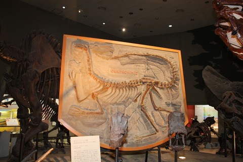 USJ、大阪自然史博物館 352