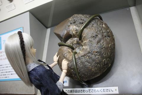 USJ、大阪自然史博物館 338