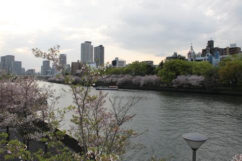 大阪城公園花見 111