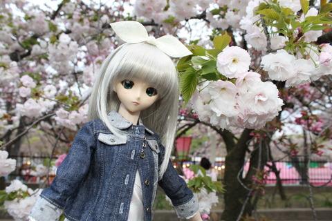 大阪城公園花見 136