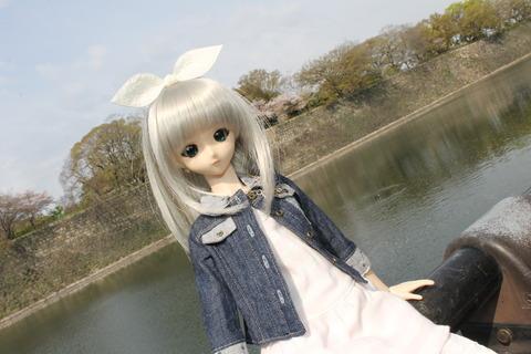 大阪城公園花見 006