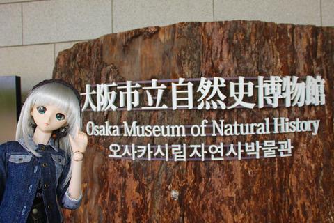 USJ、大阪自然史博物館 256-2