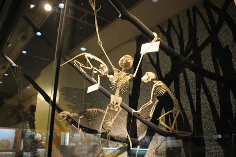 USJ、大阪自然史博物館 409