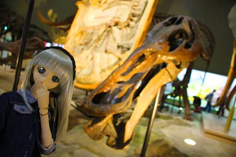 USJ、大阪自然史博物館 346-2