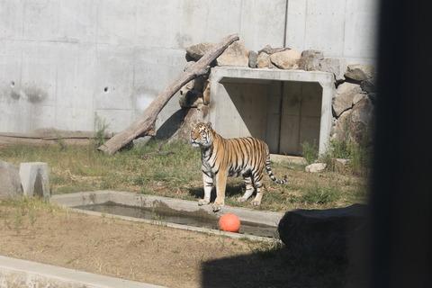 天王寺動物園 163