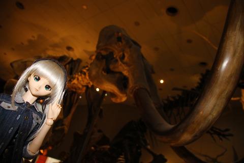 USJ、大阪自然史博物館 313-2