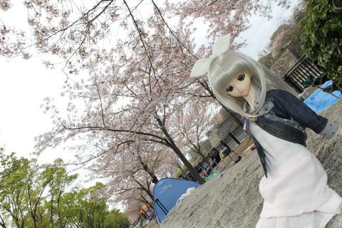 大阪城公園花見 040
