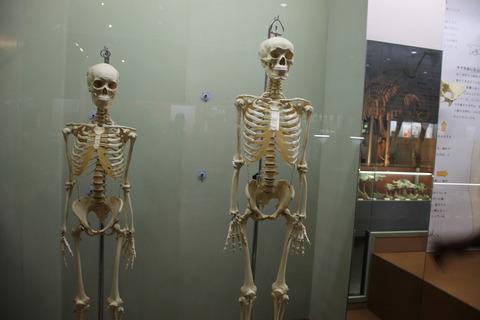 USJ、大阪自然史博物館 404