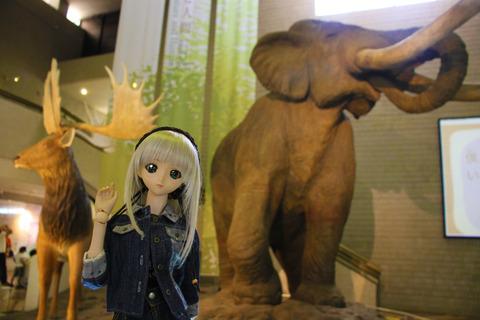 USJ、大阪自然史博物館 440-2