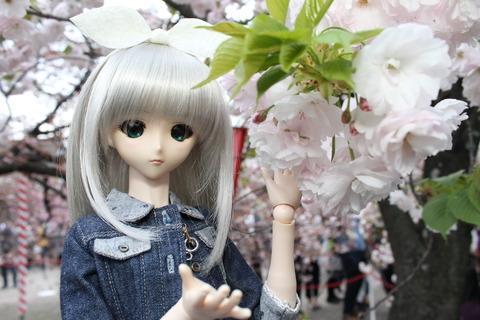 大阪城公園花見 131