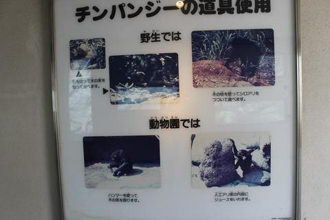 天王寺動物園 044