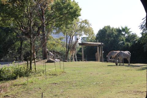 天王寺動物園 167
