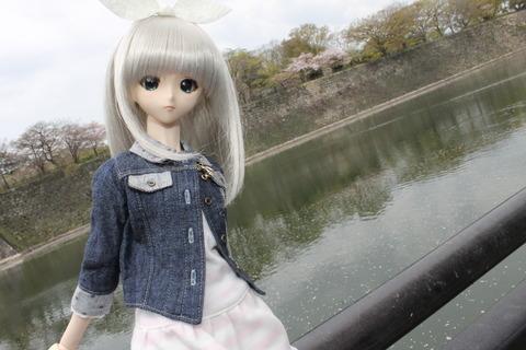 大阪城公園花見 057