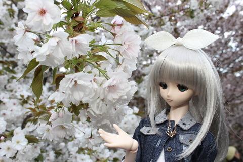 大阪城公園花見 145